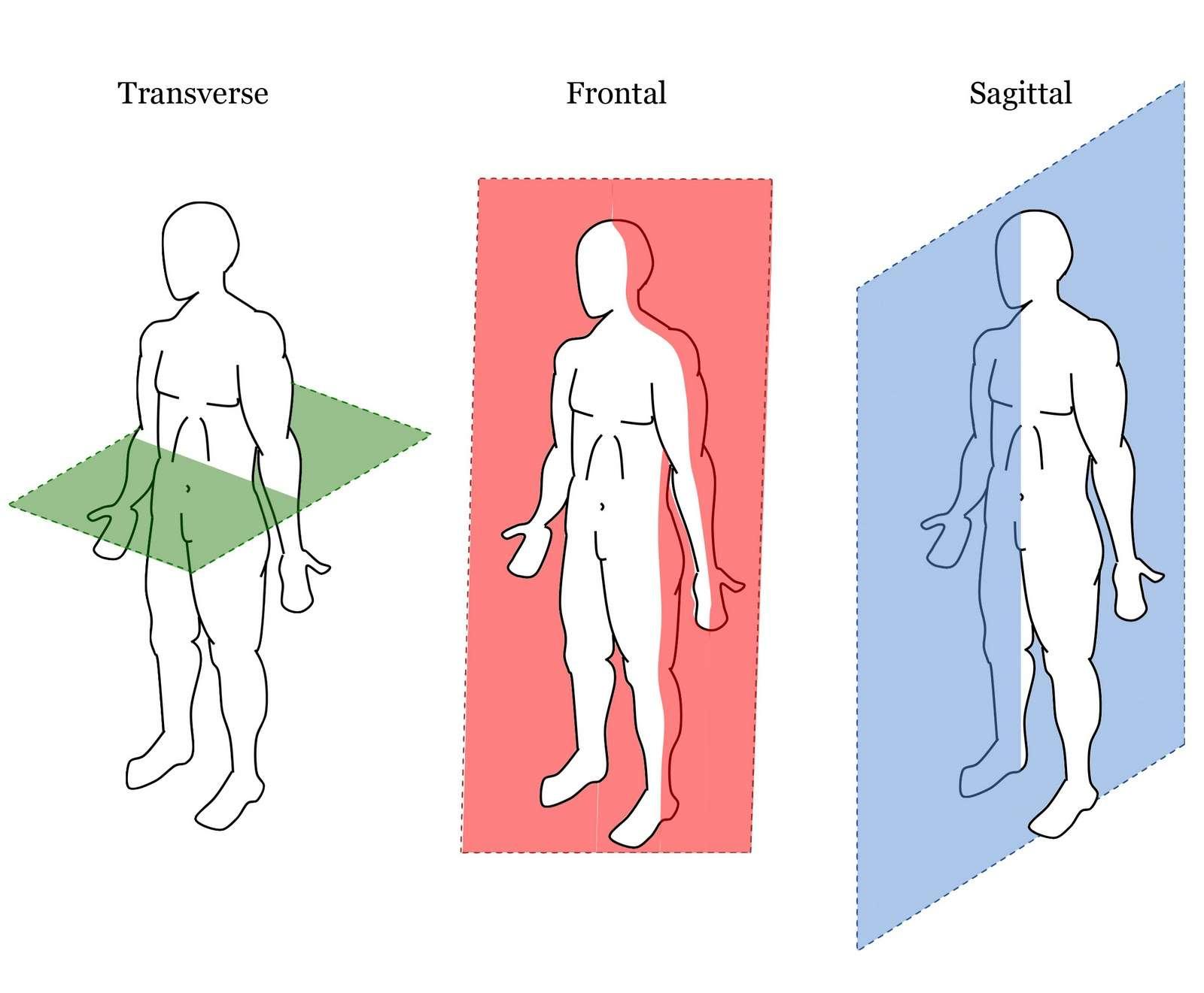 Planes of Motion: Sagittal, Transverse, Frontal